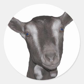 Toggenburg Goat Round Stickers