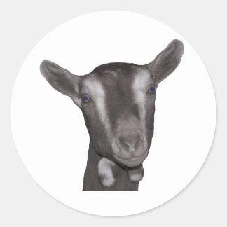 Toggenburg Goat Sticker