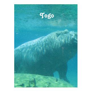 Togo Hippo Postcard