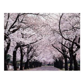 TOKYO POSTCARD