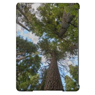 Toldo de árbol de abeto de douglas
