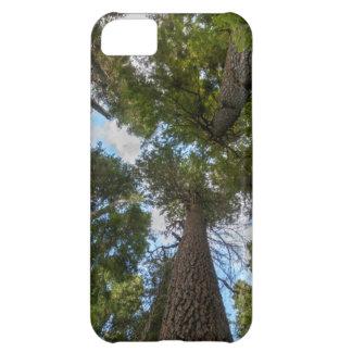 Toldo de árbol de abeto de douglas funda para iPhone 5C