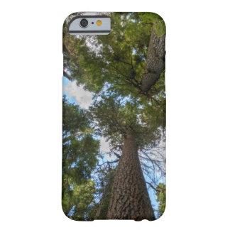 Toldo de árbol de abeto de douglas funda de iPhone 6 barely there