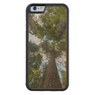 Toldo de árbol de abeto de douglas funda de iPhone 6 bumper arce