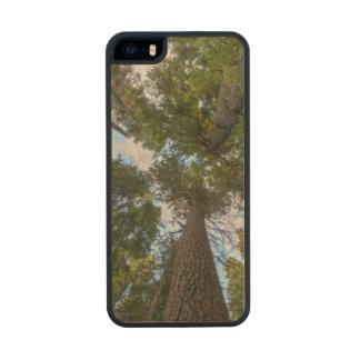 Toldo de árbol de abeto de douglas funda de madera para iPhone 5