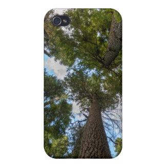 Toldo de árbol de abeto de douglas iPhone 4/4S carcasas
