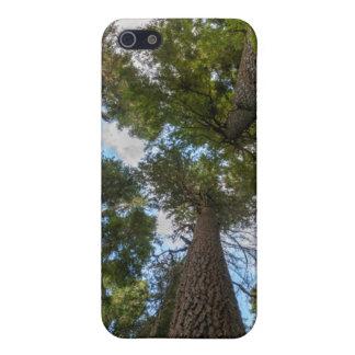 Toldo de árbol de abeto de douglas iPhone 5 fundas