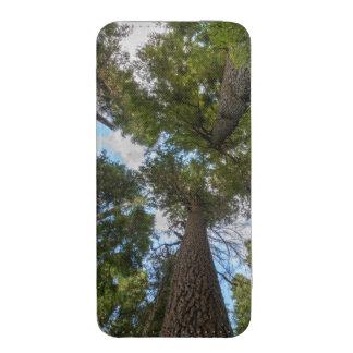 Toldo de árbol de abeto de douglas bolsillo para iPhone