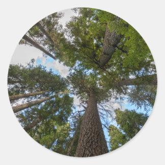 Toldo de árbol de abeto de douglas pegatina redonda
