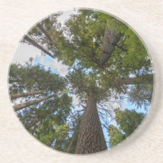 Toldo de árbol de abeto de douglas posavasos manualidades