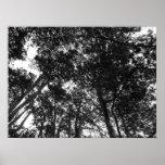 Toldo de árbol, parque del Bute, Cardiff Impresiones