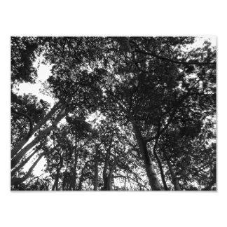 Toldo de árbol, parque del Bute, Cardiff Impresion Fotografica