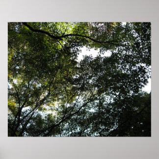 Toldo de árbol póster