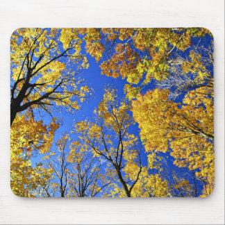 Toldo de árboles amarillo de arce de la caída alfombrilla de raton