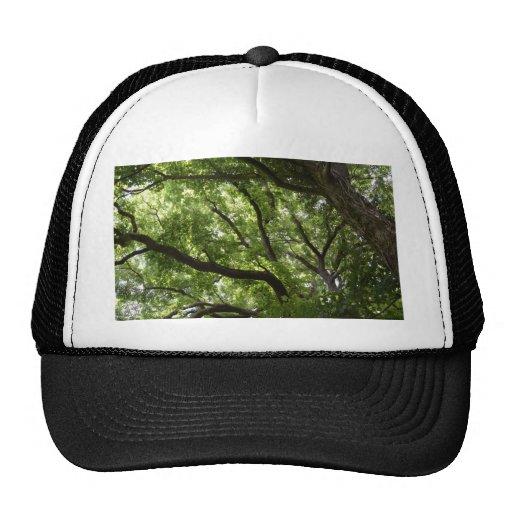 Toldo de bosque inglés gorra