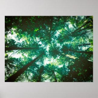 Toldo de bosque póster