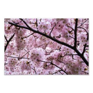 Toldo de la flor de cerezo cojinete