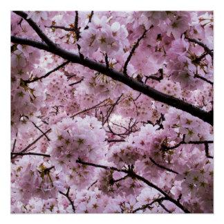 Toldo de la flor de cerezo perfect poster
