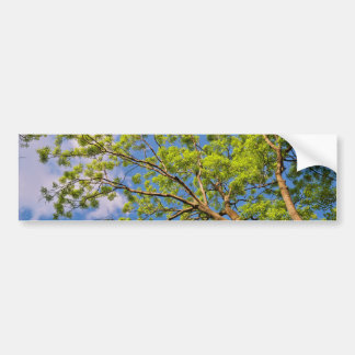 Toldo de la primavera pegatina de parachoque