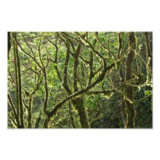 Toldo de la selva tropical de Costa Rica Fotografías
