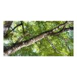 Toldo de olivo negro tarjetas fotográficas personalizadas