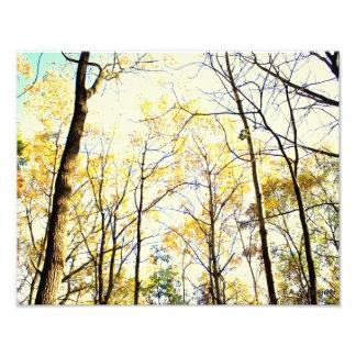 Toldo del otoño de E.A. Schneider Photo Fotos