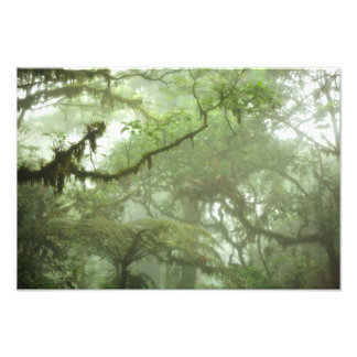 Toldo tropical de la selva tropical fotografía