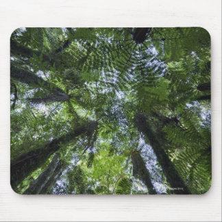 Toldos de los árboles de Ponga en arbusto nativo Alfombrilla De Ratón