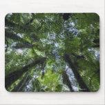 Toldos de los árboles de Ponga en arbusto nativo e Alfombrilla De Ratones