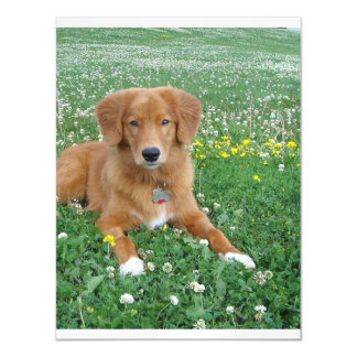 Toller_in clover.png magnetic card