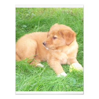 Toller_pup 2.png magnetic card