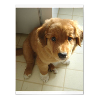 Toller_Pup sitting 2.png Magnetic Card