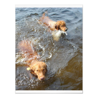 Tollers_in_the_water.png Invitaciones Magnéticas