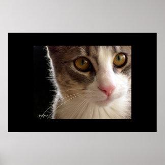 Tom Cat Posters