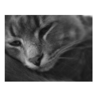 Tom - The Cat Postcard