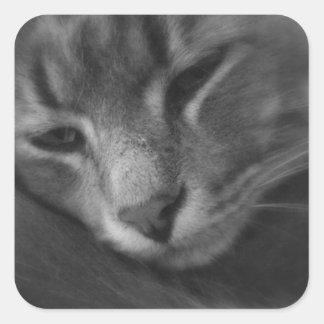 Tom - The Cat Square Sticker