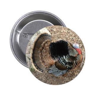 Tom Turkey - Thanksgiving button