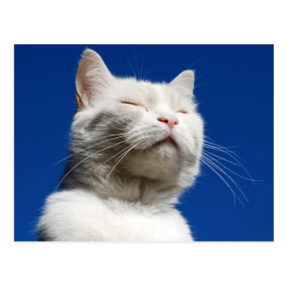 Tom white cat postcard