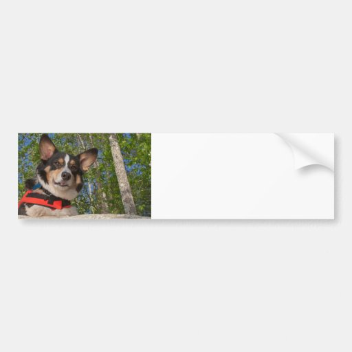 Tomar una rotura etiqueta de parachoque