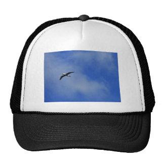 Tomar vuelo gorras