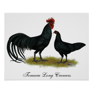 Tomaru Long Crower Chickens Poster