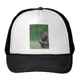 Tomate del gorila gorra