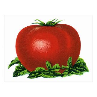 Tomate maduro rojo del vintage, frutas y verduras postales
