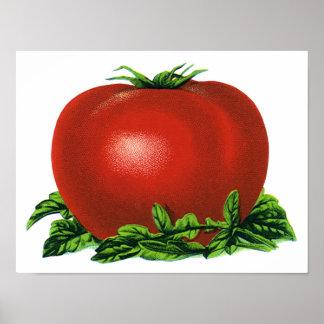 Tomate maduro rojo del vintage, frutas y verduras póster