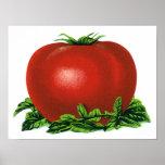 Tomate maduro rojo del vintage, legumbres de fruta impresiones