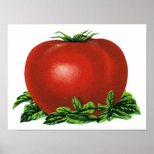 Tomate maduro rojo del vintage, legumbres de impresiones