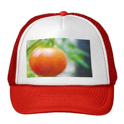 Tomate rojo maduro de la herencia gorras de camionero
