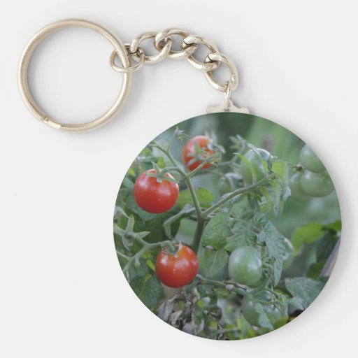 Tomates crecientes en un jardín llavero redondo tipo pin