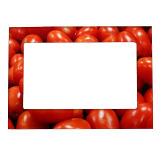 Tomates de Roma Foto De Imanes