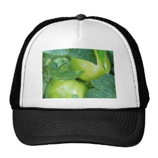 Tomates en la vid gorras de camionero